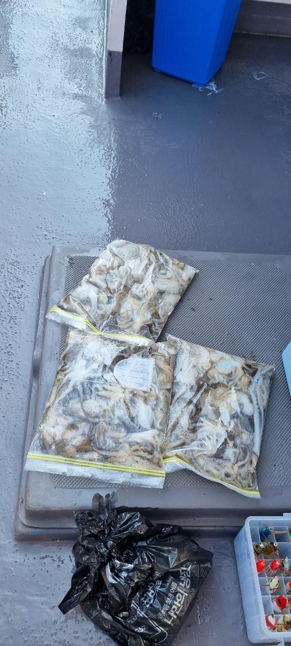 장고항 해안선호 9월 15일 조황 사진입니다